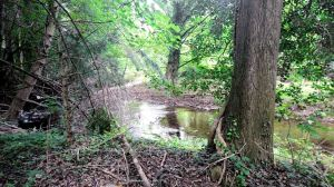 water running through a woodland
