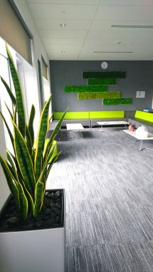 The staff room is grey with pops of greens, a plant is in the foreground