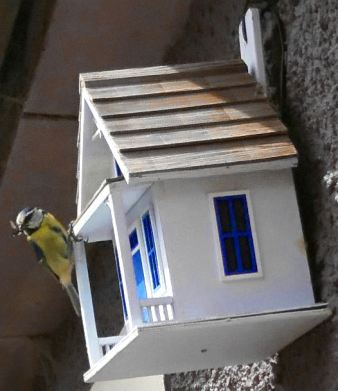 a blue tit perches on the edge of a bird house