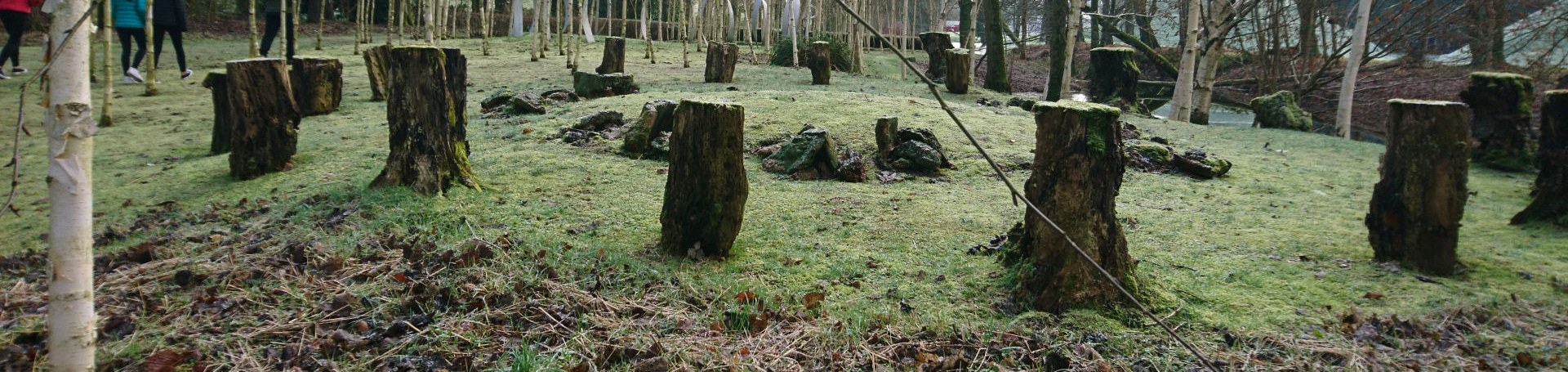 tree stumps in a circle act like seats