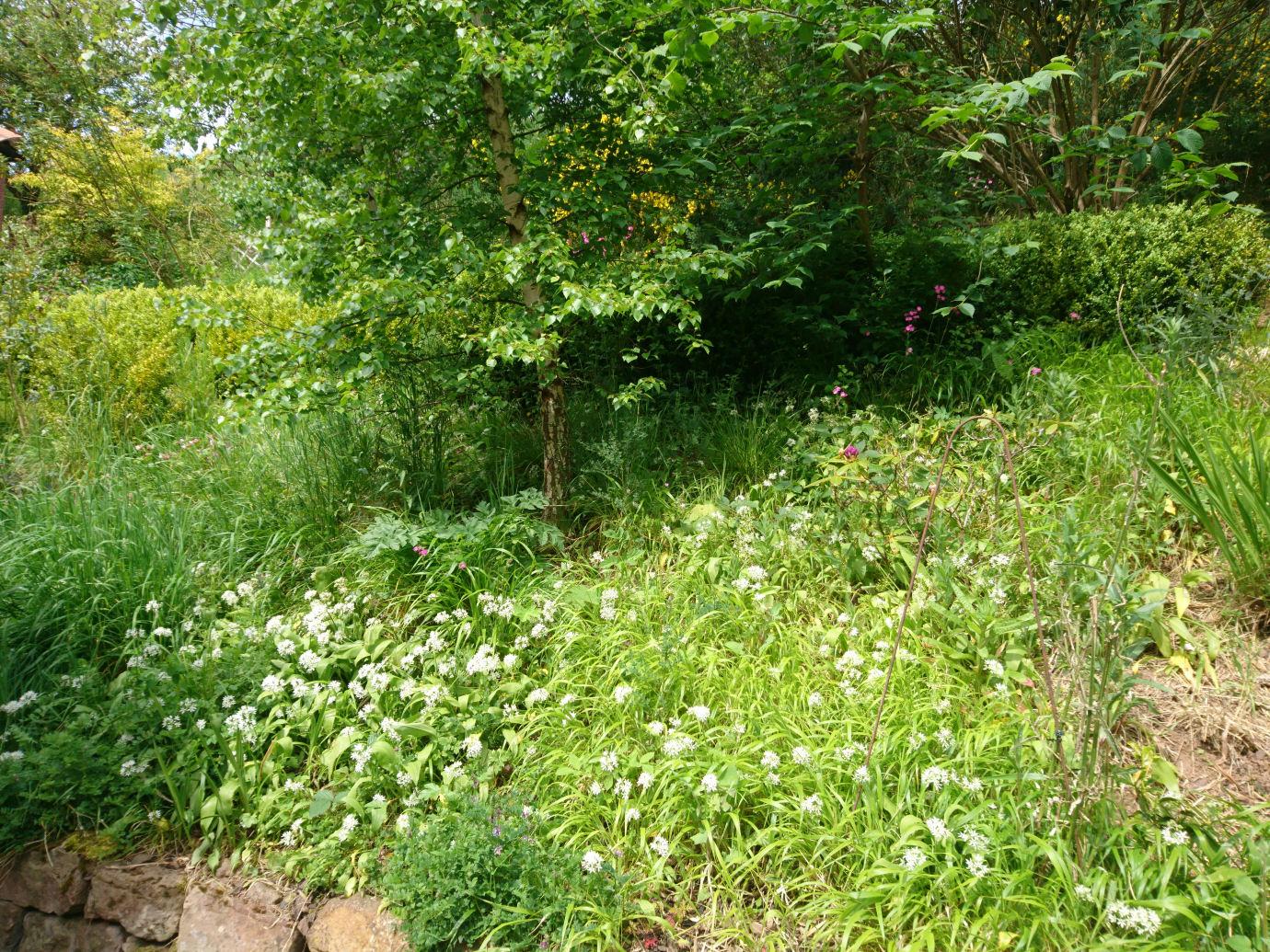 a wildflower garden